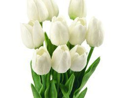 tulipan blanco