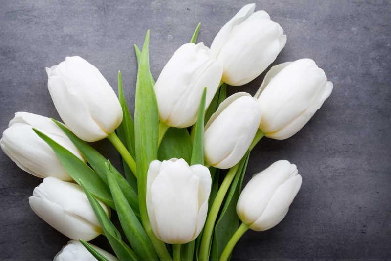 tulipan blanco significado