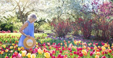 tulipanes cuidados